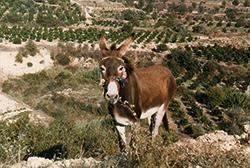 svježa magarca magarca tinejdžeri titani se slikaju seksa