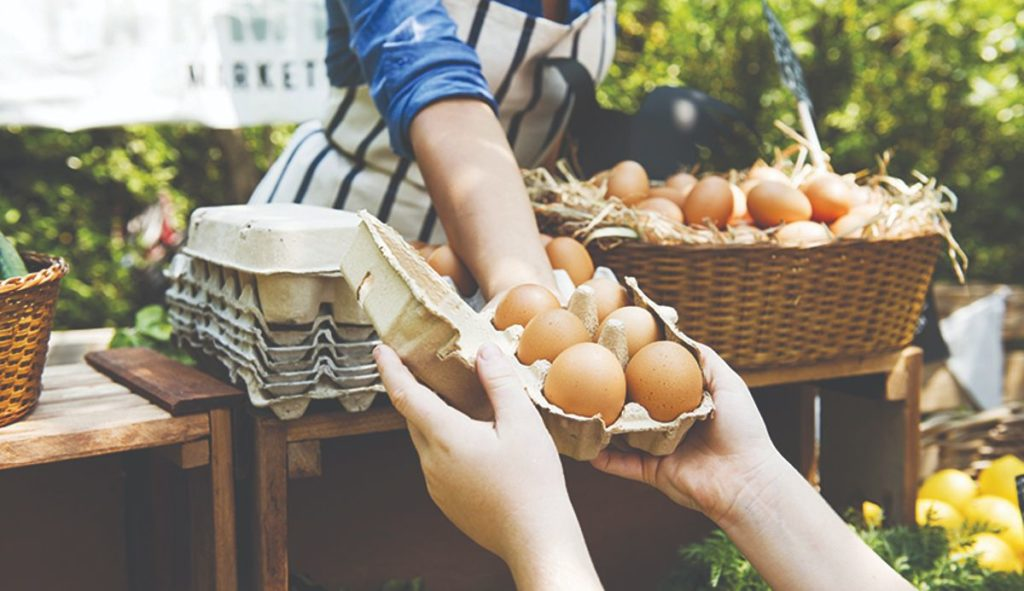 čime hraniti kokoši nesilice