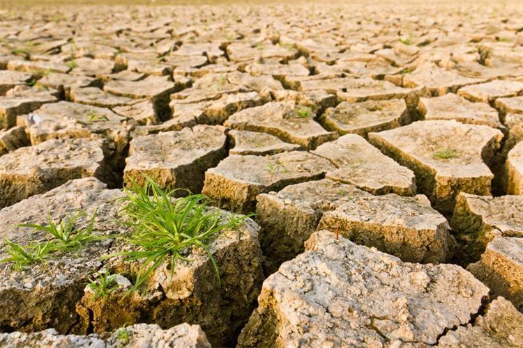dan dezertifikacije tla i suše