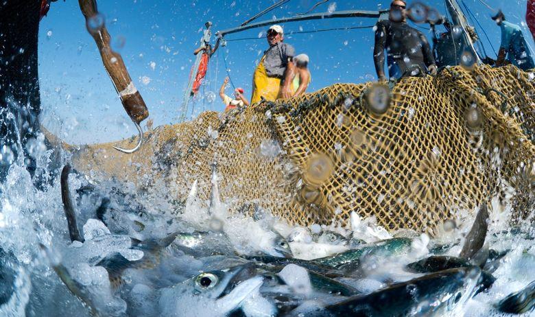 portal gospodarskog ribolova