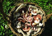 ljekovite gljive