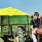 zaštitna konstrukcija traktora