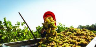 proizvodnja domaćih vina