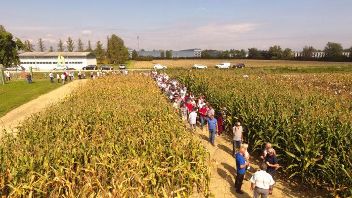 dan polja kukuruza bc institut