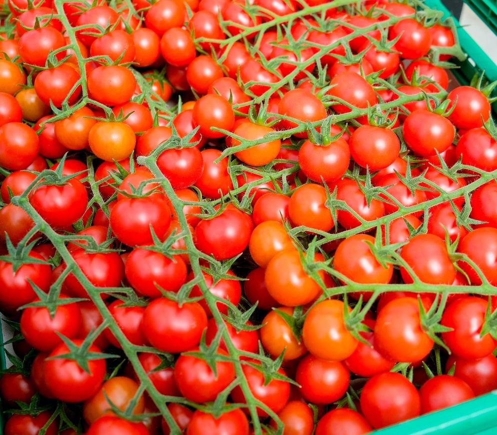 cherry rajčica