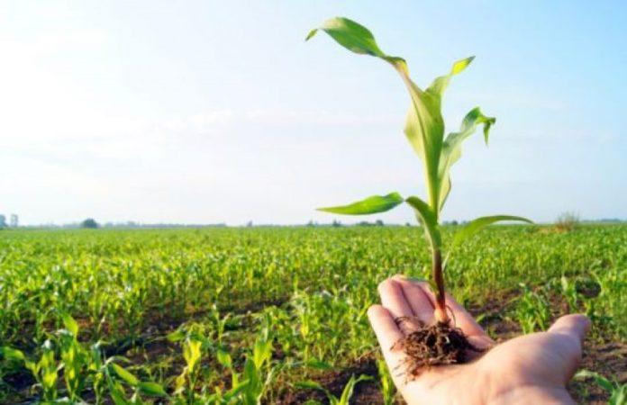 maldi poljoprivrednik