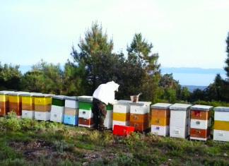 prihranjivanje pčela