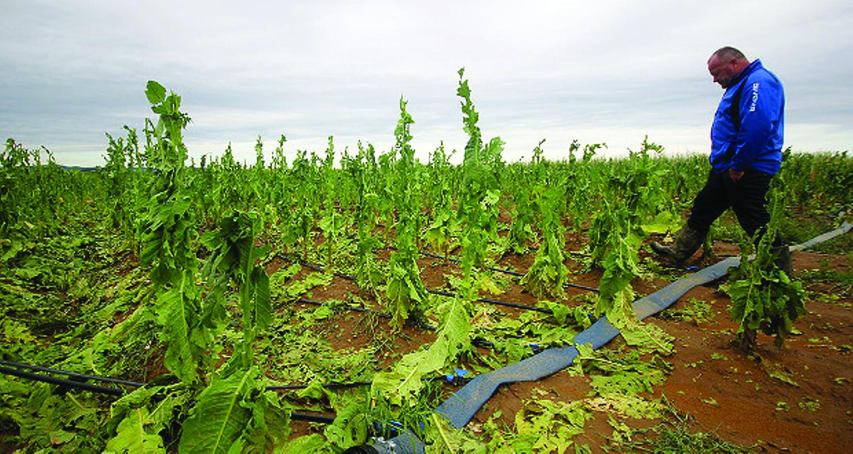 štete u poljoprivredi