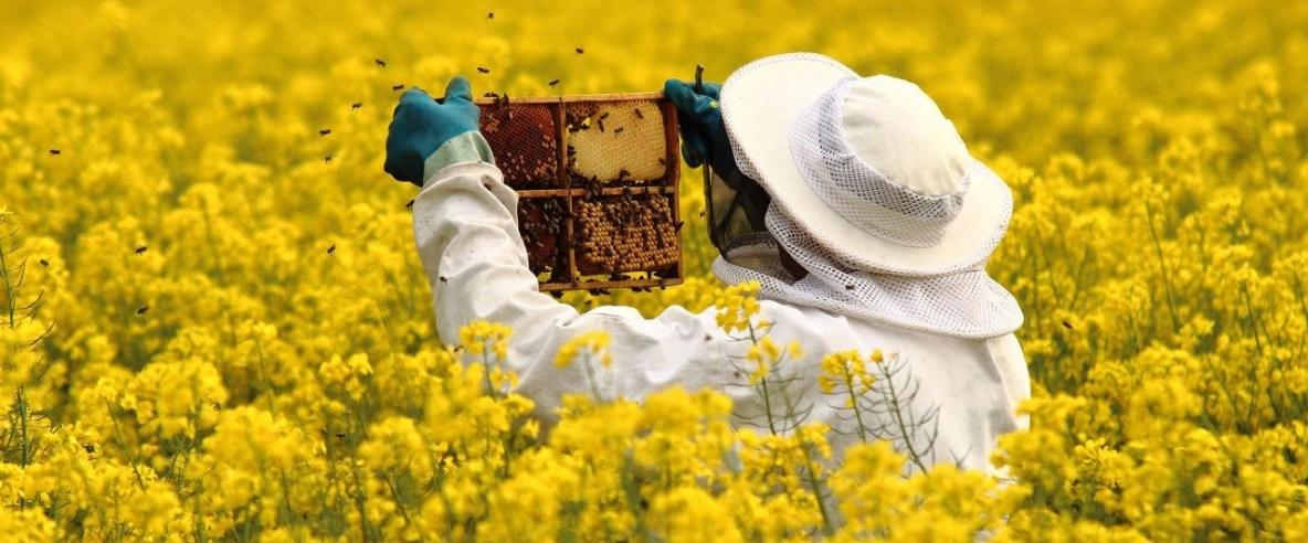 Pčelarima