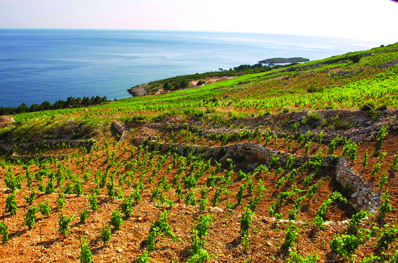 novi pravilnik o zemljopisnim područjima uzgoja vinove loze