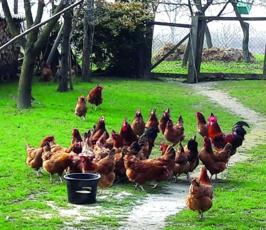 proizvodnja jaja