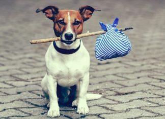 veterinarski dani