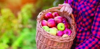 najbolje sorte jabuke