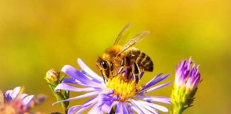 svjetski dan pčela