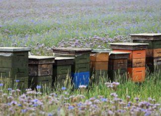 potpore pčelarima zbog gubitka medonosnog potencijala