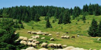 javni poziv za zakup šumskog zemljišta