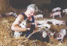 uvjeti za uzgoj svinja