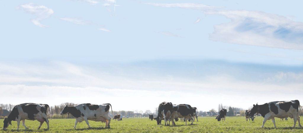 senzori u proizvodnji mlijeka