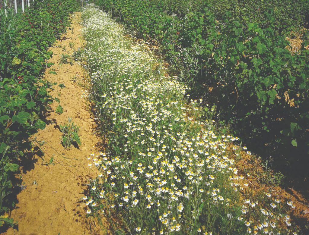biodinamičko voćarstvo