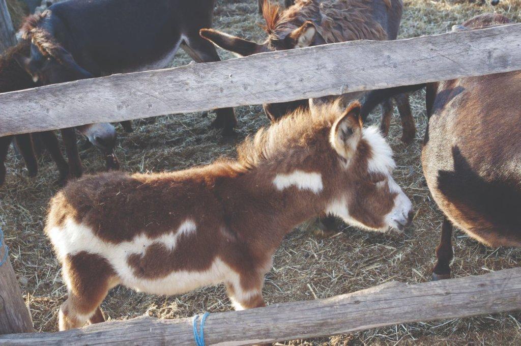 magareće mlijeko