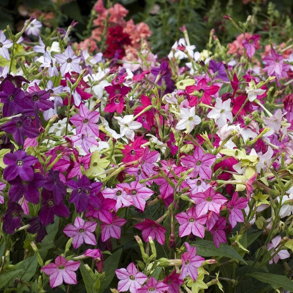 cvjetne vrste