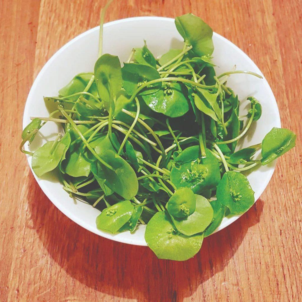 potočarka kres salata