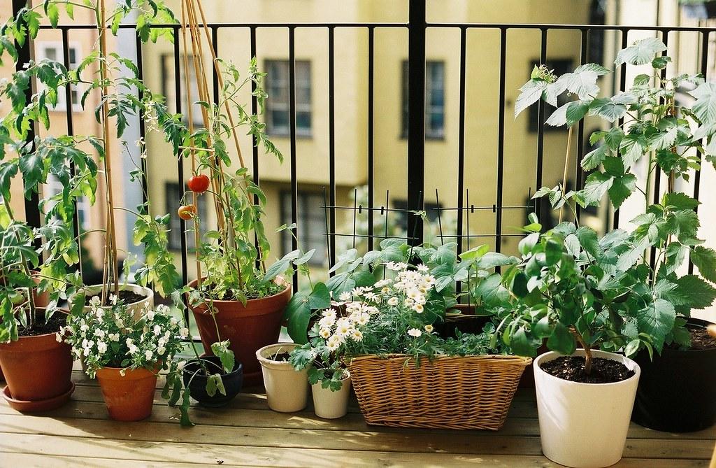 povrće na balkonu