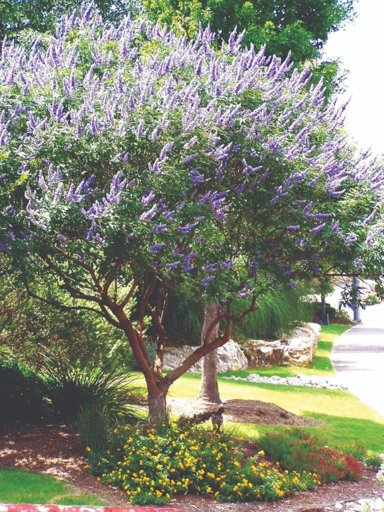 ukrasna stabla za dvorište