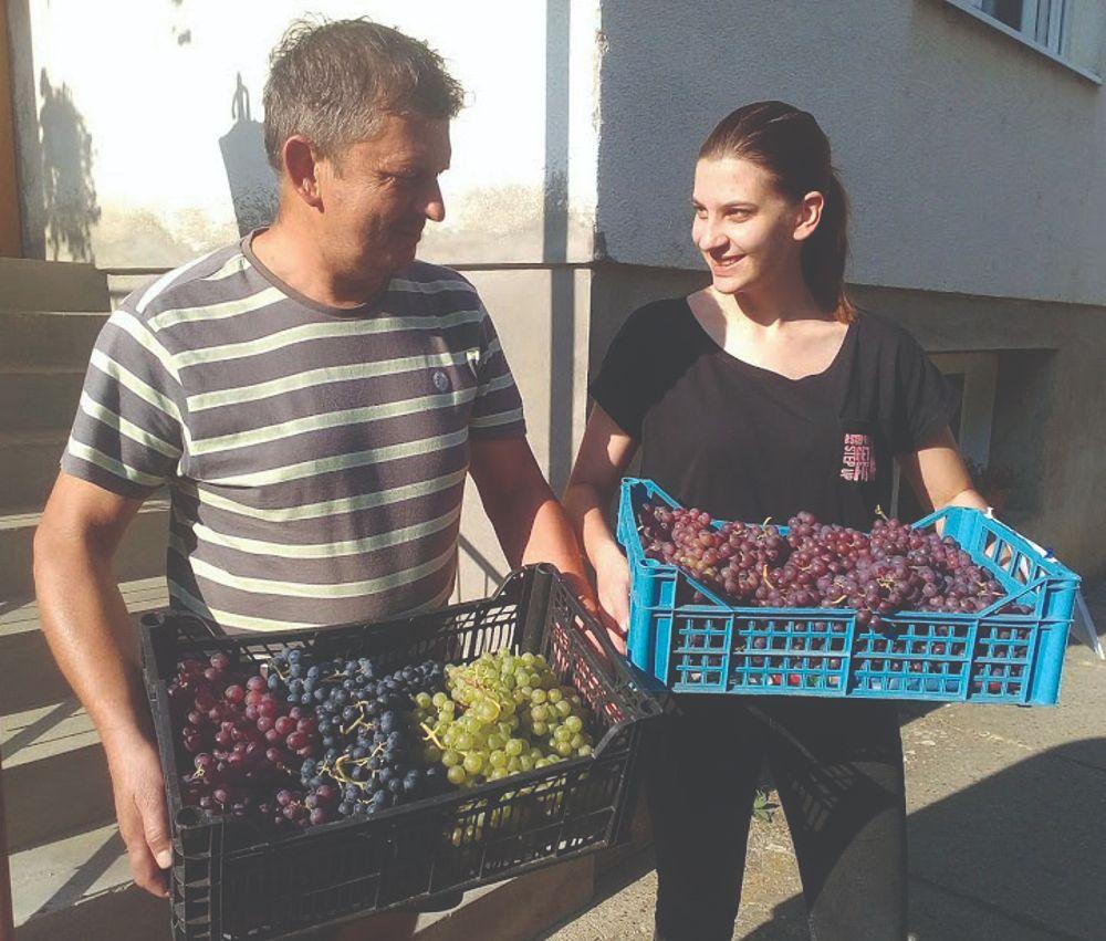 uzgoj stolnog grožđa