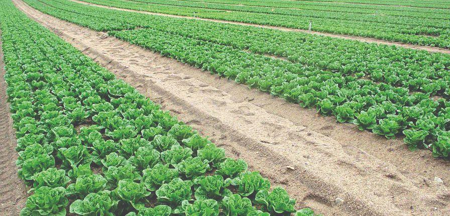 poljoprivreda i turizam