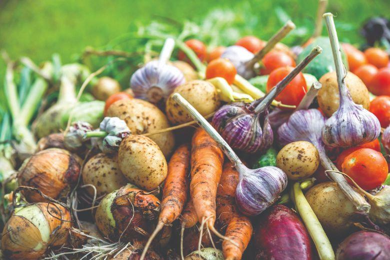 skaldištenje povrća za zimu