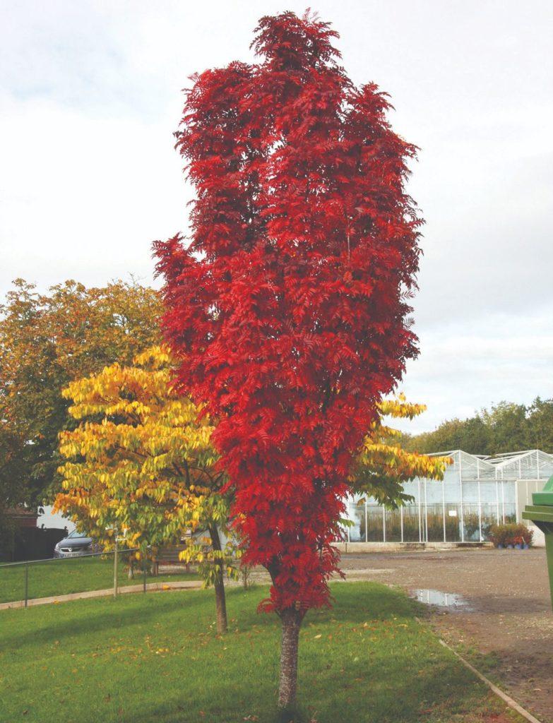 ukrasna stabla