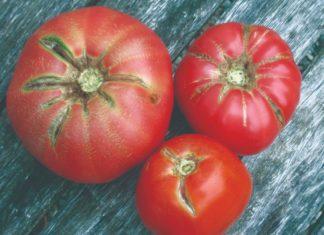 poremećaji rajčice