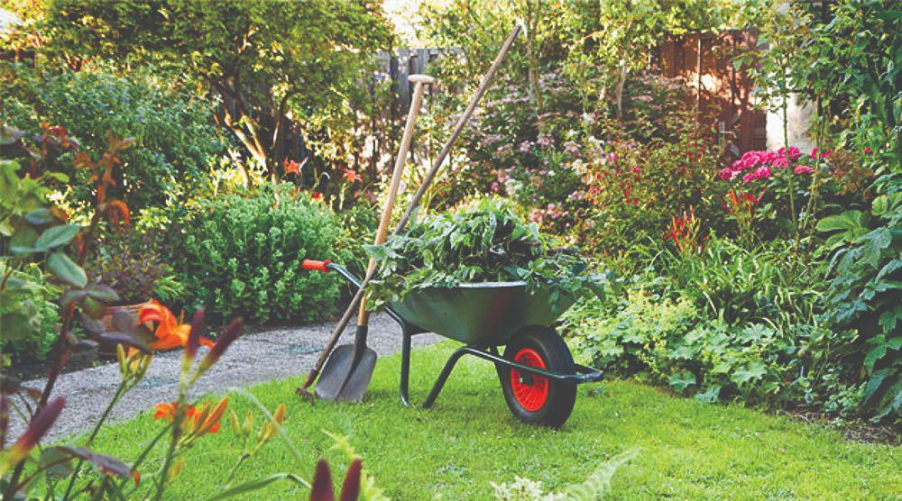 raskošni ljetni vrt