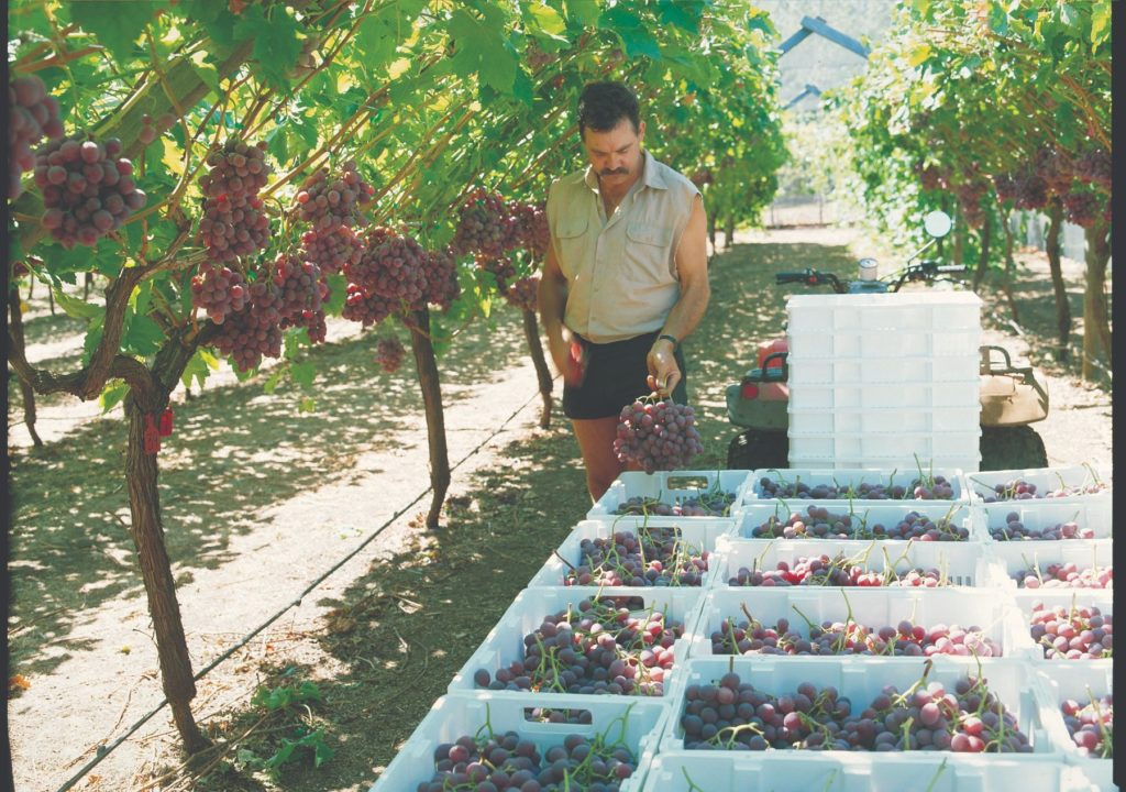 transportni sustavi u vinogradarstvu