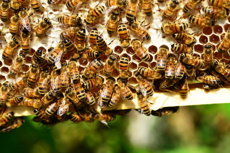 iskorištena omotnica za pčelare