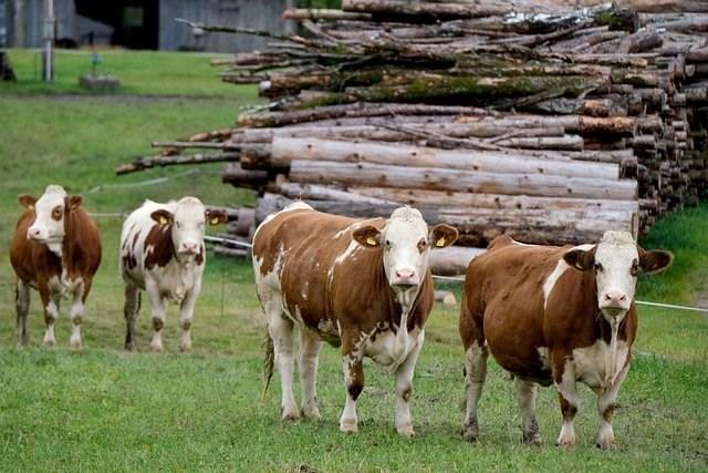 sufinanciranje stočarskih uzgojnih udruženja