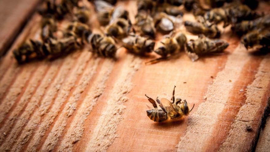 upitnik pčele