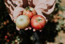 dani domaće jabuke enna fruit