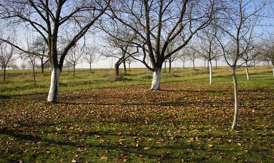 organska gnojiva gnojidba u voćnjaku