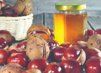 festival pčelarstva kestenov med