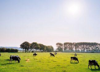 izravne potpore poljoprivredi i iaks mjera