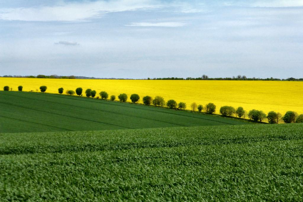 poljoprivreda poljske