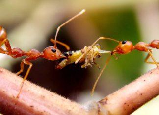 mravi u vrtu