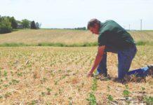uzgoj pokrovnih biljaka