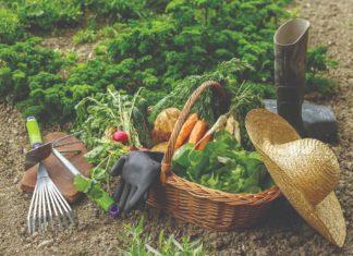 berba i uzgoj povrća