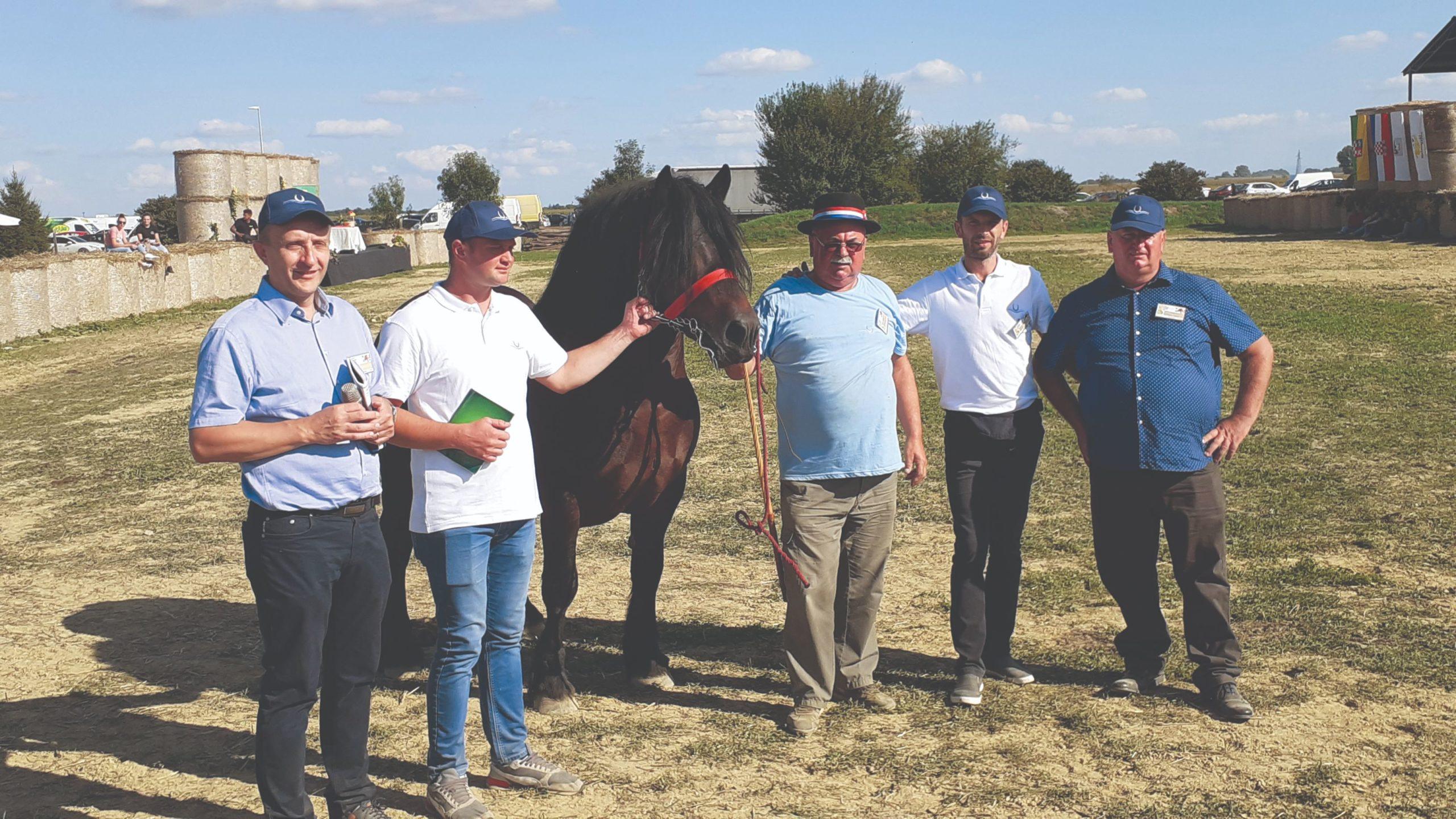 šampion državne stočarske izložbe konja