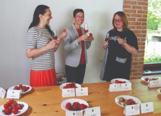 ocjenjivanje jagoda