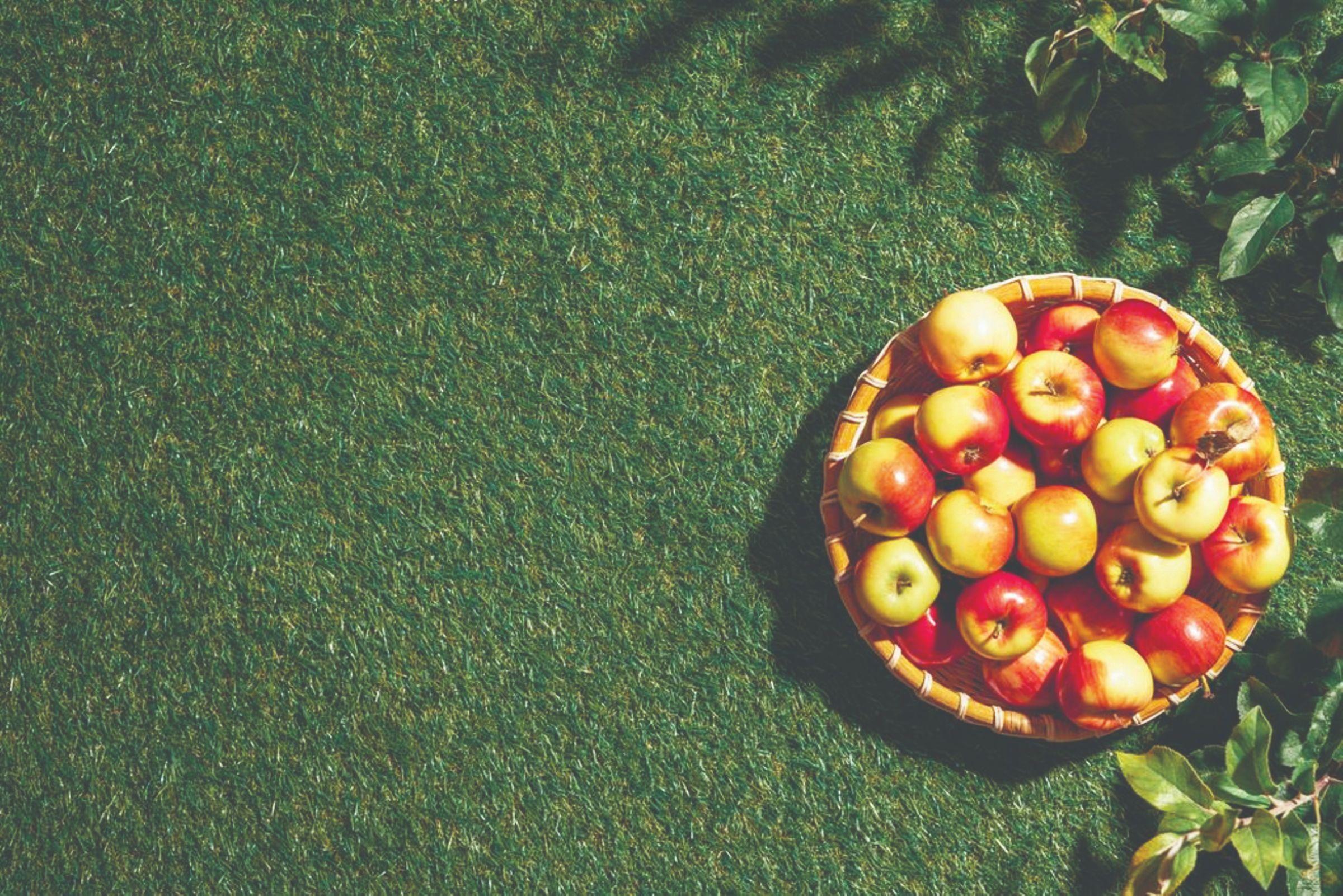 mikroelementi ishrana gnojidba