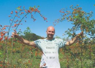 uzgoj šipka opg ćutuk
